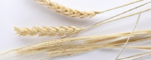 einkorn nutritional benefits