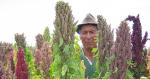 quinoa hio